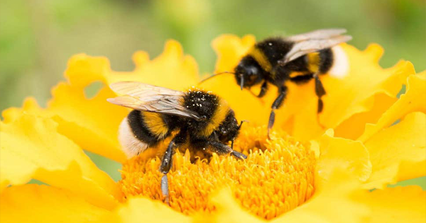 The Bee is Declared The Most Important Species on Earth - See why