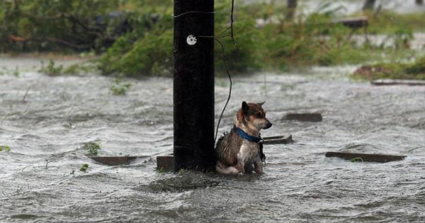 A New Bill Makes it Illegal To Abandon Pets In Natural Disasters